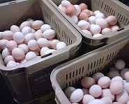 eggs-25